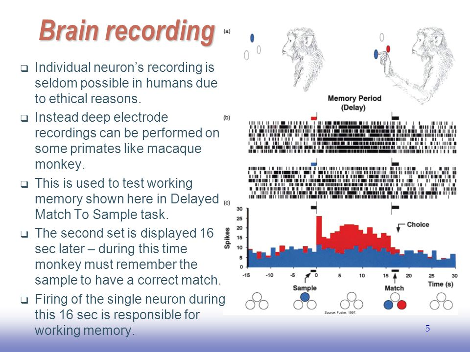 Brain recording Individual neuron's recording is seldom possible in humans due to ethical reasons.