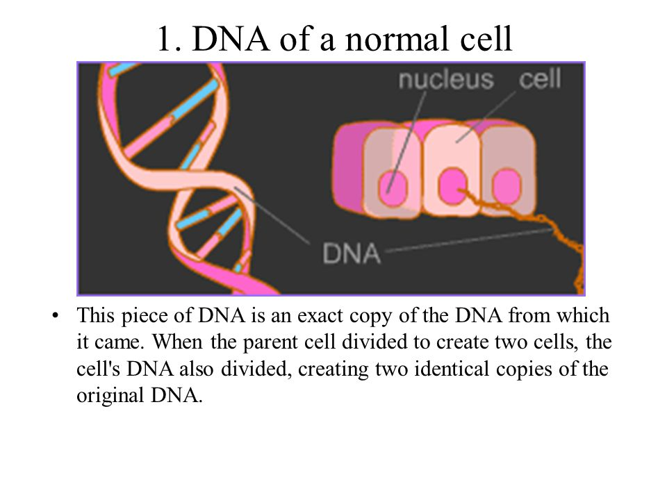 1. DNA of a normal cell