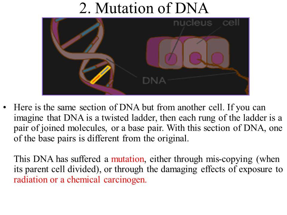2. Mutation of DNA