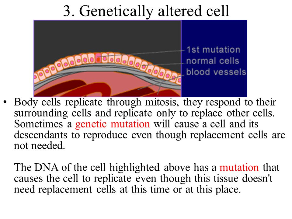 3. Genetically altered cell
