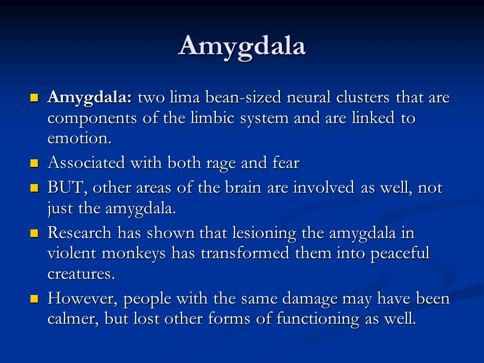 Amygdala Amygdala: two lima bean-sized neural clusters that are components of the limbic system and are linked to emotion.
