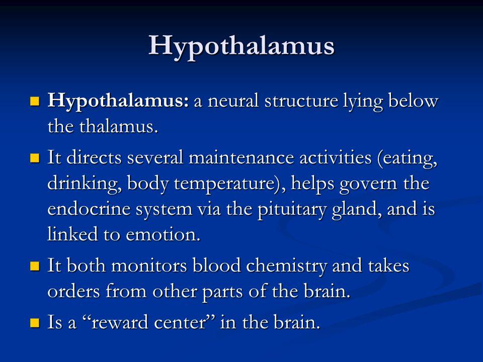 Hypothalamus Hypothalamus: a neural structure lying below the thalamus.