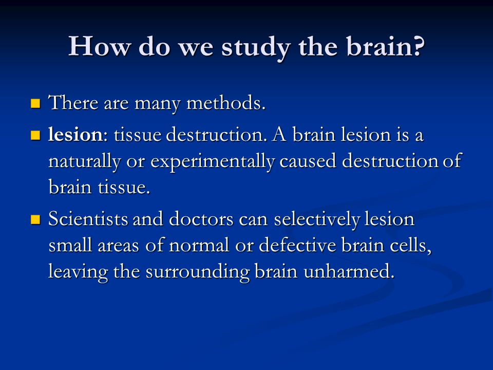 How do we study the brain
