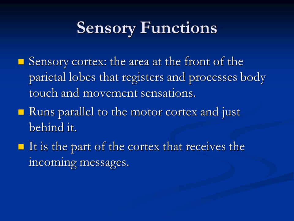 Sensory Functions Sensory cortex: the area at the front of the parietal lobes that registers and processes body touch and movement sensations.