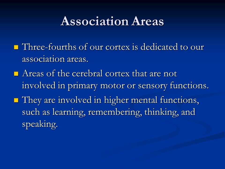 Association Areas Three-fourths of our cortex is dedicated to our association areas.
