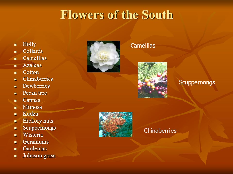 Flowers of the South Holly Collards Camellias Azaleas Cotton