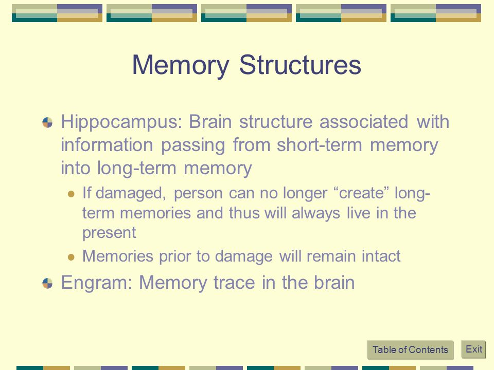 Memory Structures Hippocampus: Brain structure associated with information passing from short-term memory into long-term memory.