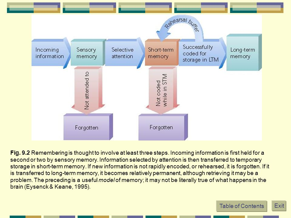 Fig. 9. 2 Remembering is thought to involve at least three steps