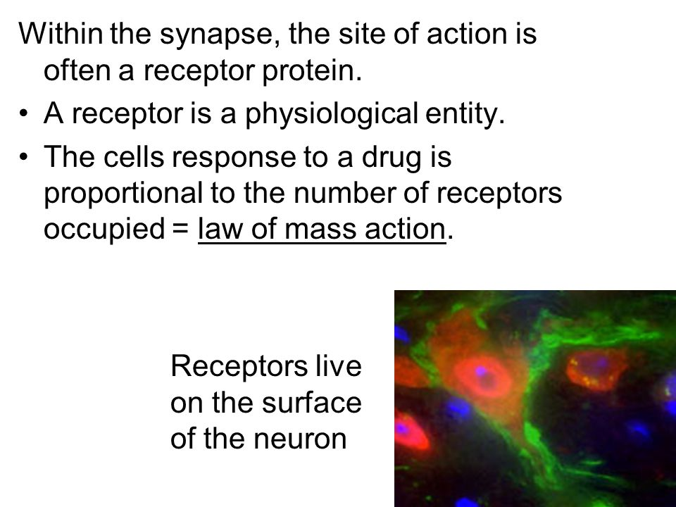 Within the synapse, the site of action is often a receptor protein.
