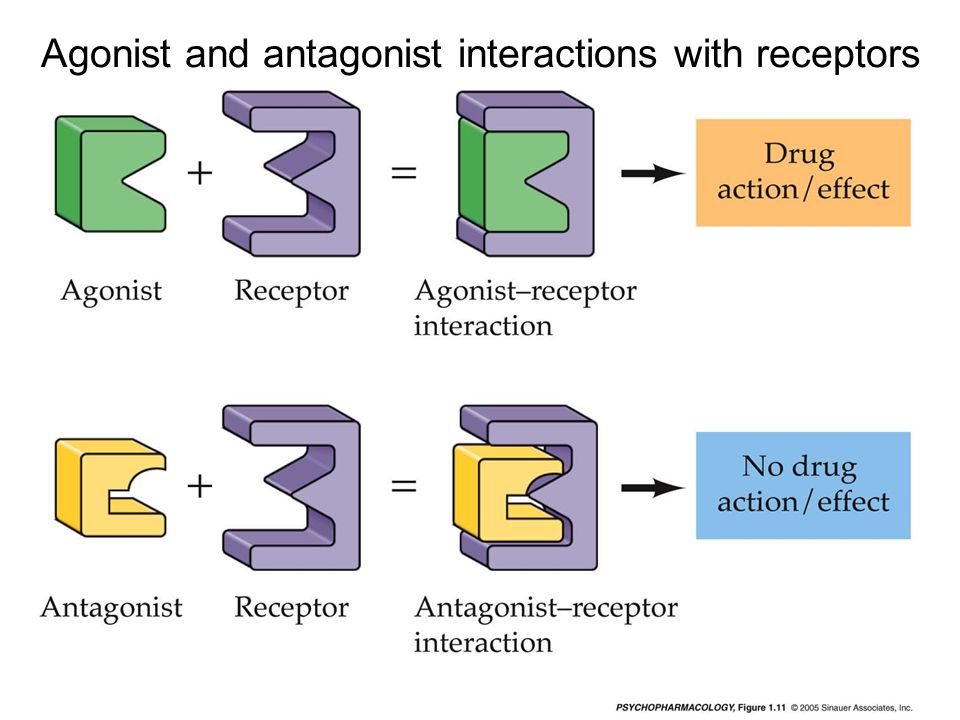 Agonist and antagonist interactions with receptors