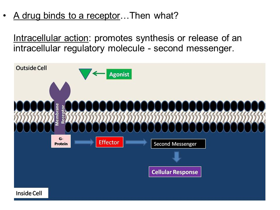 A drug binds to a receptor…Then what