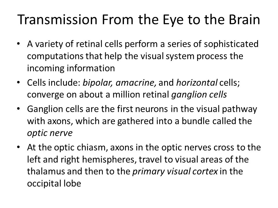 Transmission From the Eye to the Brain