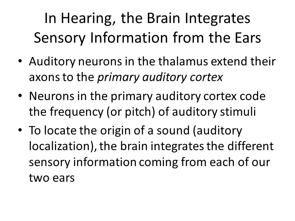 In Hearing, the Brain Integrates Sensory Information from the Ears
