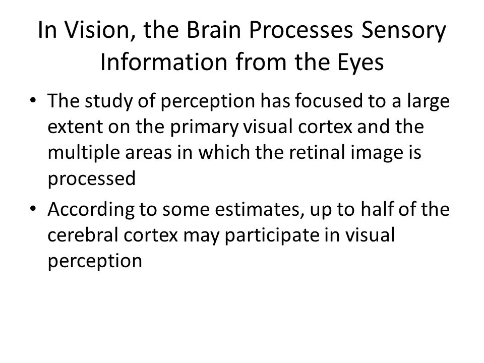 In Vision, the Brain Processes Sensory Information from the Eyes