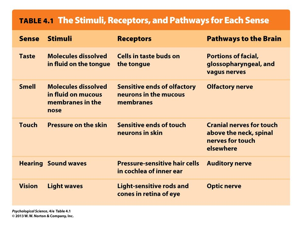 Table 4.1 The Stimuli, Receptors, and Pathways for Each Sense