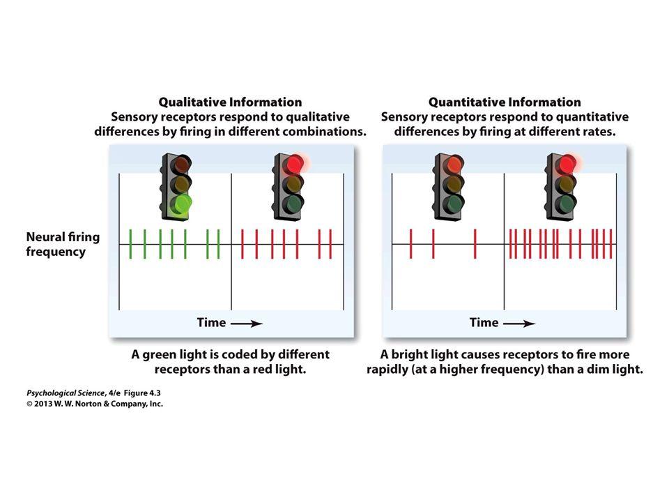 FIGURE 4.3 Qualitative versus Quantitative Sensory Information
