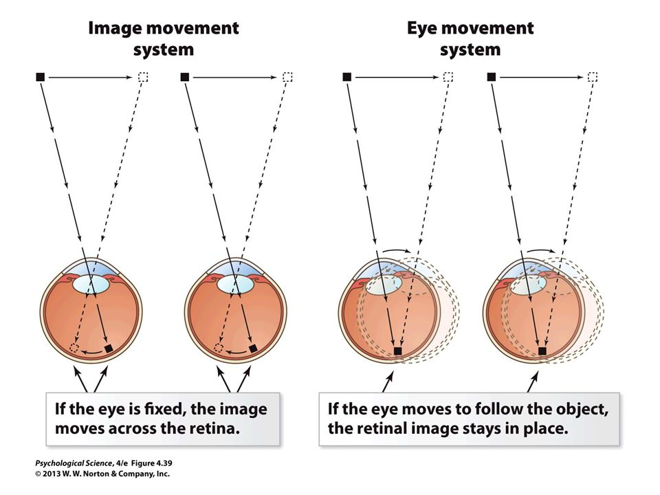 FIGURE 4.39 Perceiving Movement