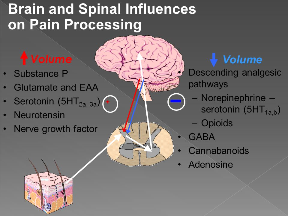 Brain and Spinal Influences on Pain Processing
