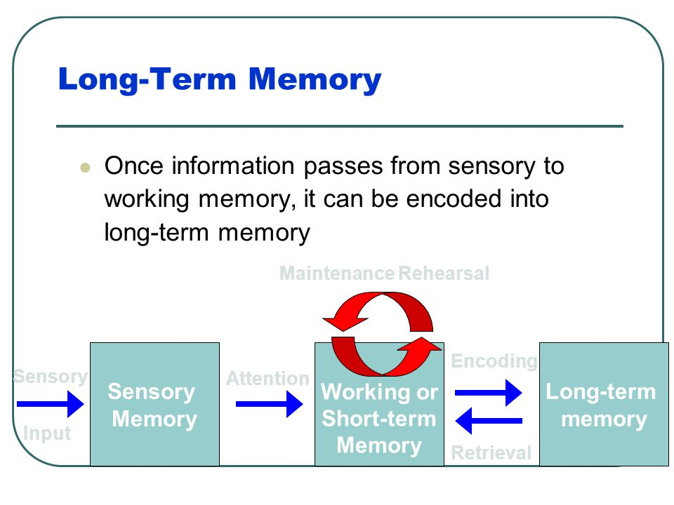 Long-Term Memory Once information passes from sensory to working memory, it can be encoded into long-term memory.