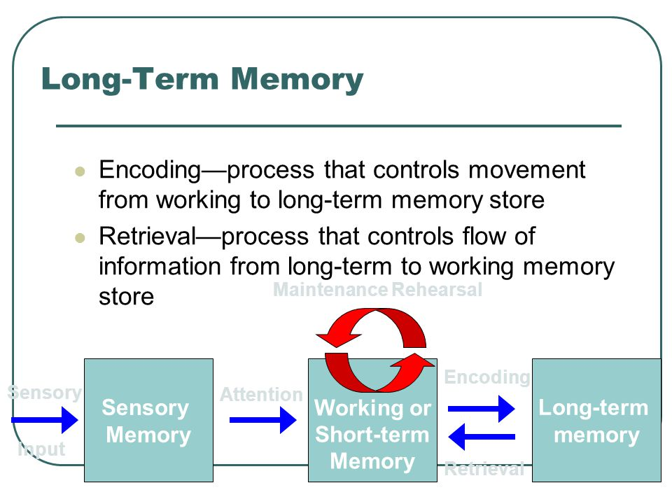 Long-Term Memory Encoding—process that controls movement from working to long-term memory store.