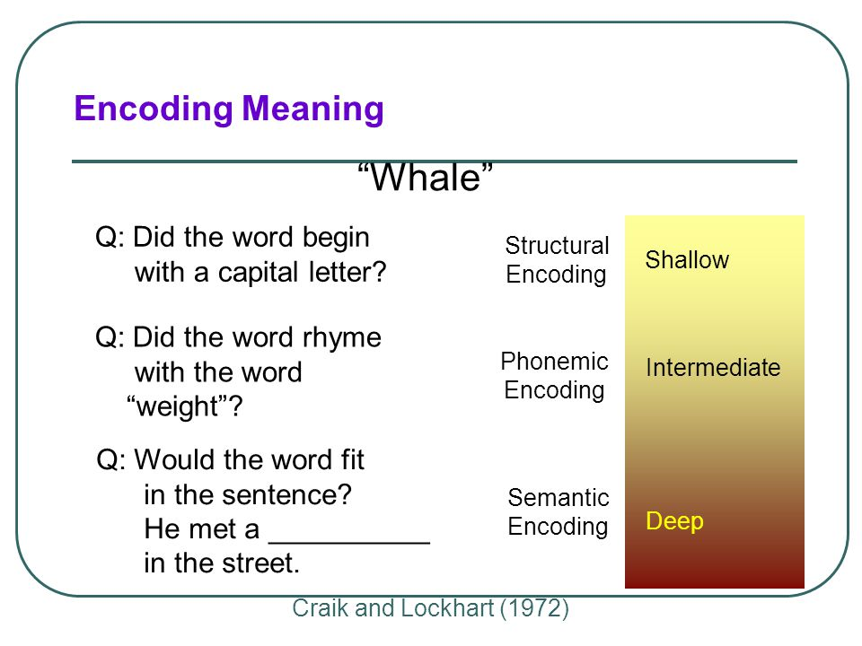 Whale Encoding Meaning Q: Did the word begin with a capital letter