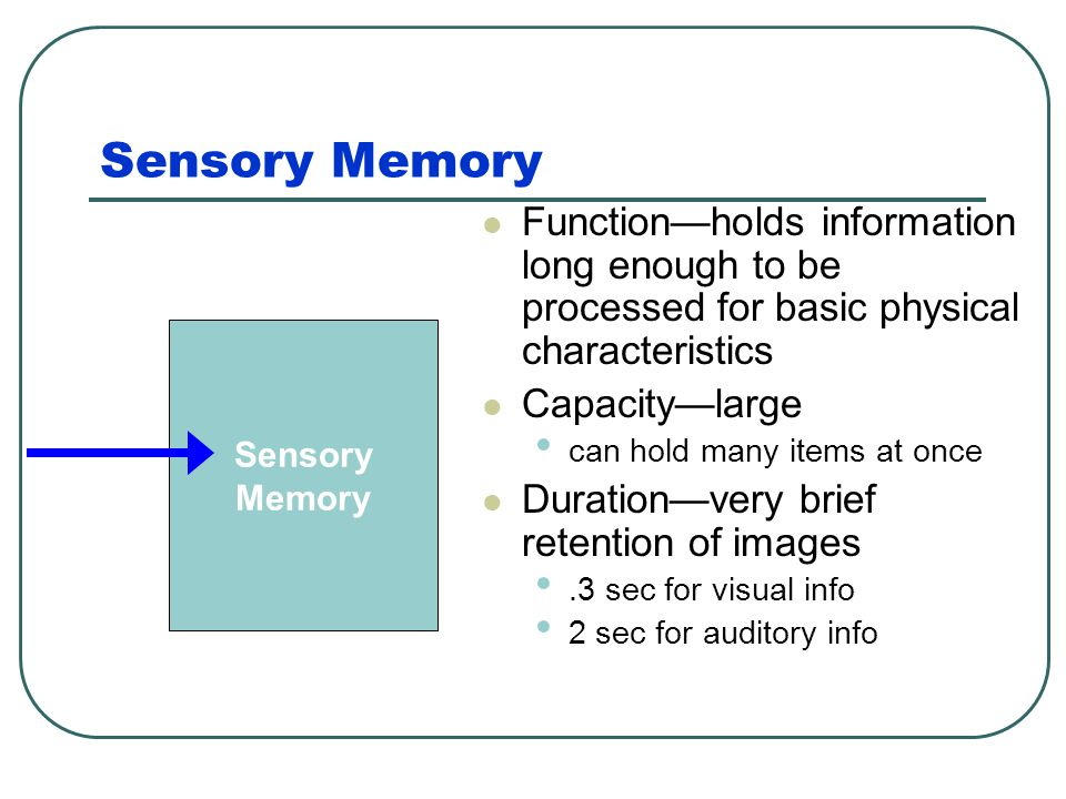 Sensory Memory Function—holds information long enough to be processed for basic physical characteristics.