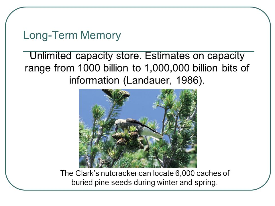Long-Term Memory Unlimited capacity store. Estimates on capacity range from 1000 billion to 1,000,000 billion bits of information (Landauer, 1986).