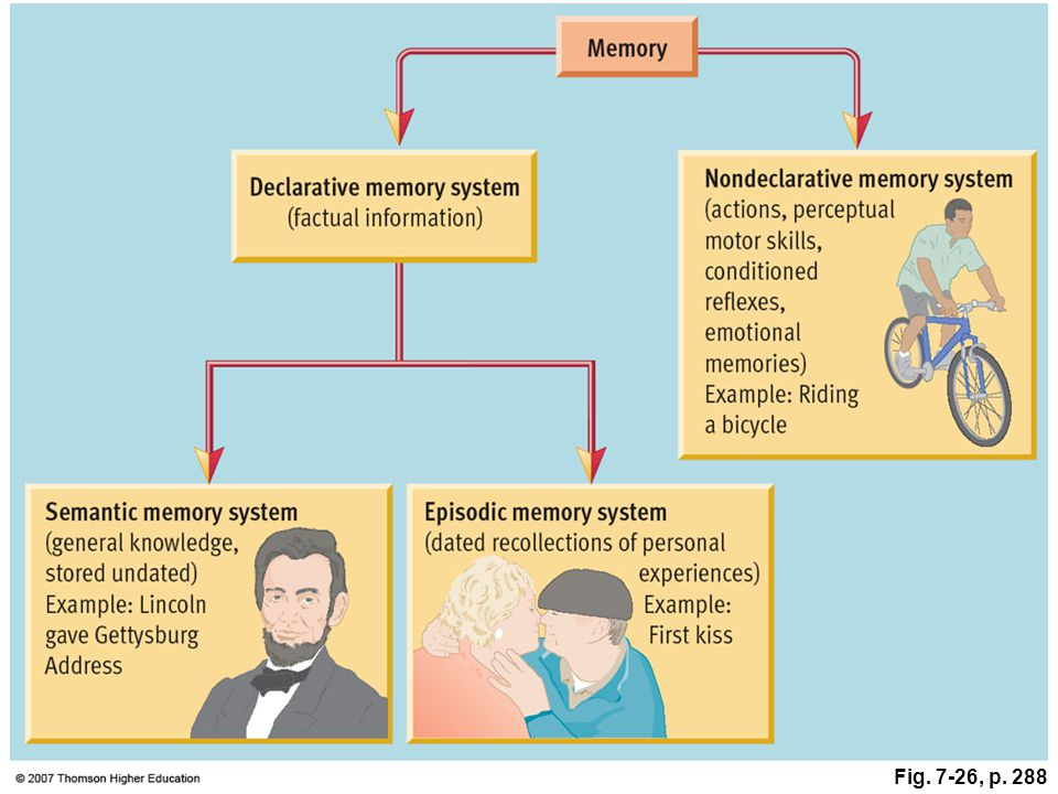 Fig. 7-26, p. 288 Figure 7.26: Theories of independent memory systems.