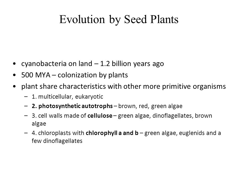 Evolution by Seed Plants