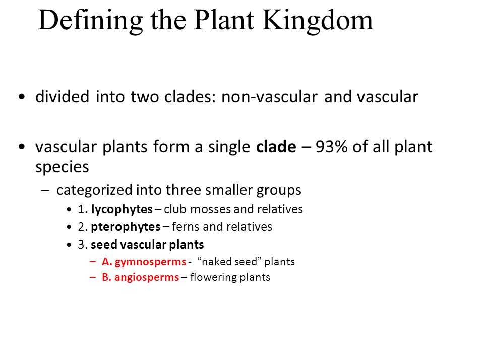 Defining the Plant Kingdom