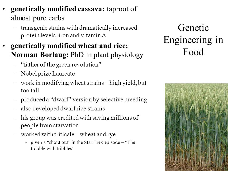Genetic Engineering in Food
