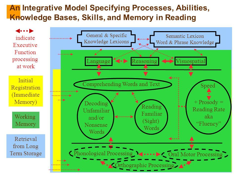 An Integrative Model Specifying Processes, Abilities, Knowledge Bases, Skills, and Memory in Reading