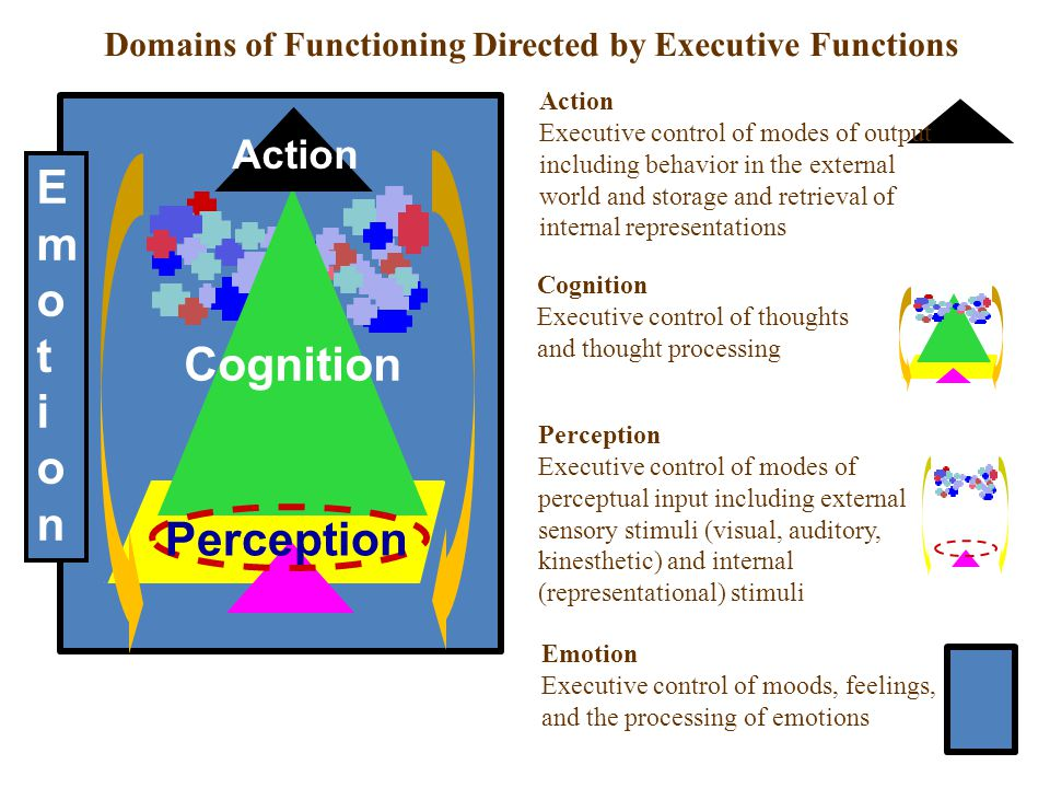 Emot ion Cognition Perception Action