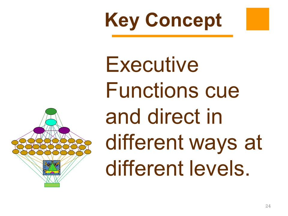 Key Concept Executive Functions cue and direct in different ways at different levels.