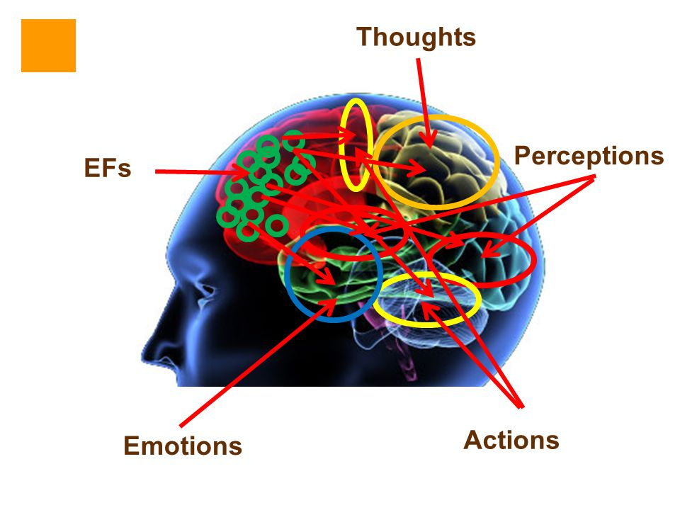 Thoughts Perceptions EFs Actions Emotions
