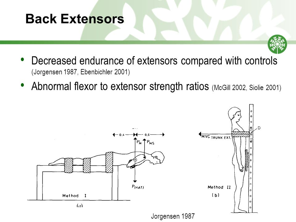 Back Extensors Decreased endurance of extensors compared with controls (Jorgensen 1987, Ebenbichler 2001)