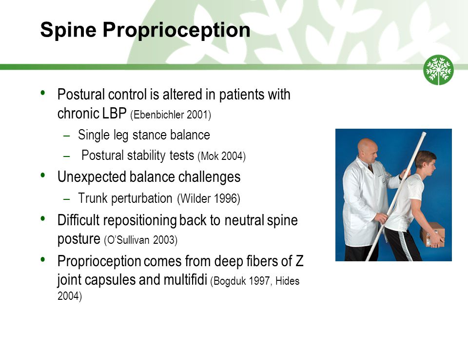 Spine Proprioception Postural control is altered in patients with chronic LBP (Ebenbichler 2001) Single leg stance balance.