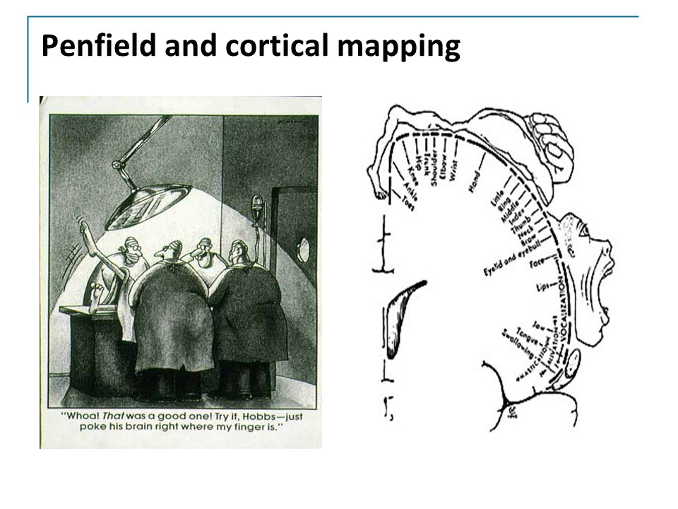 Penfield and cortical mapping