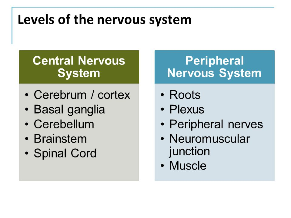 Levels of the nervous system