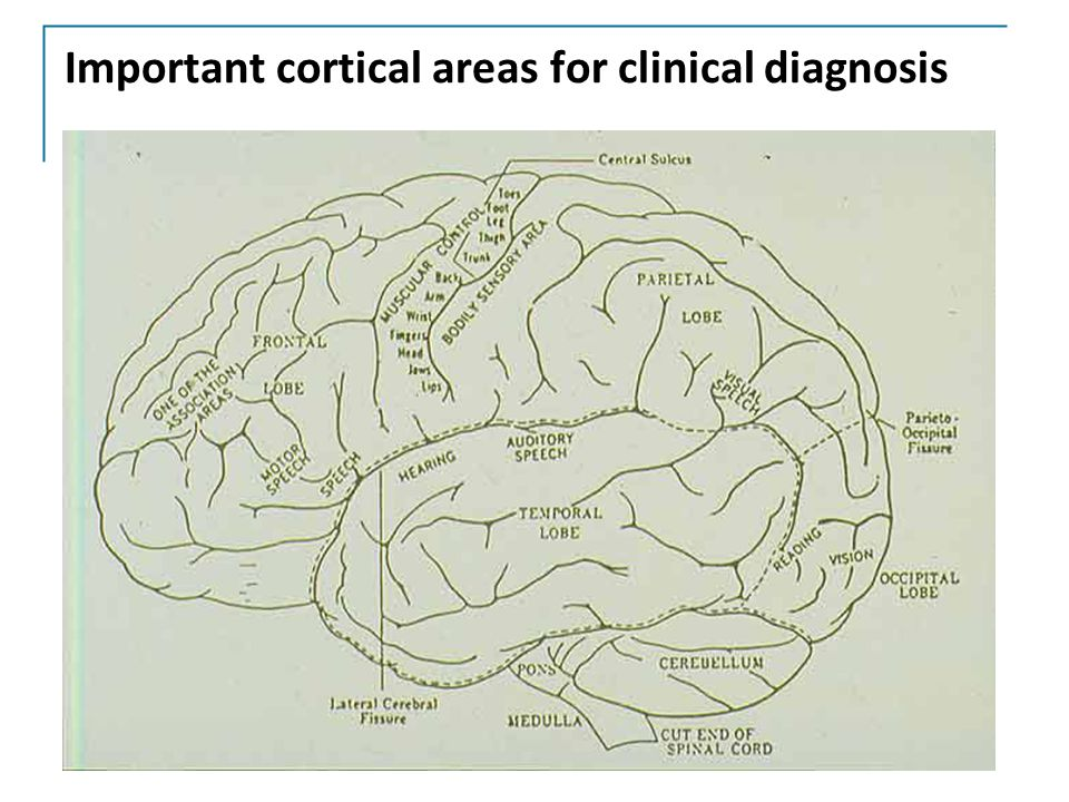 Important cortical areas for clinical diagnosis