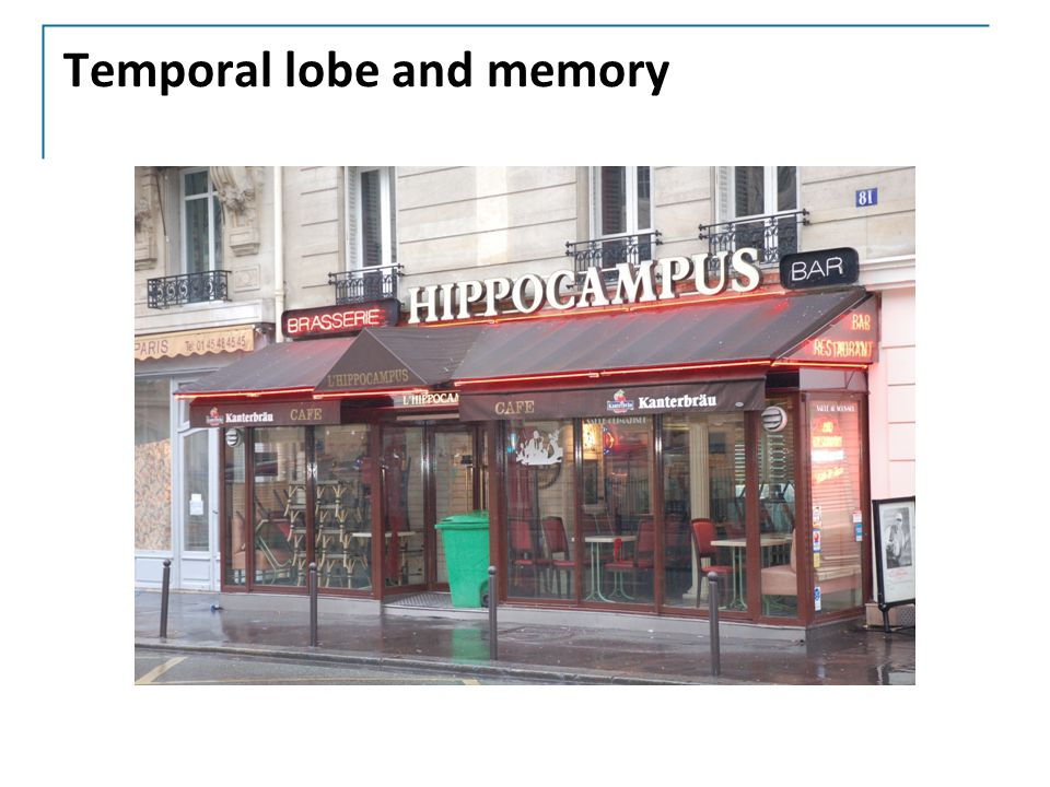 Temporal lobe and memory