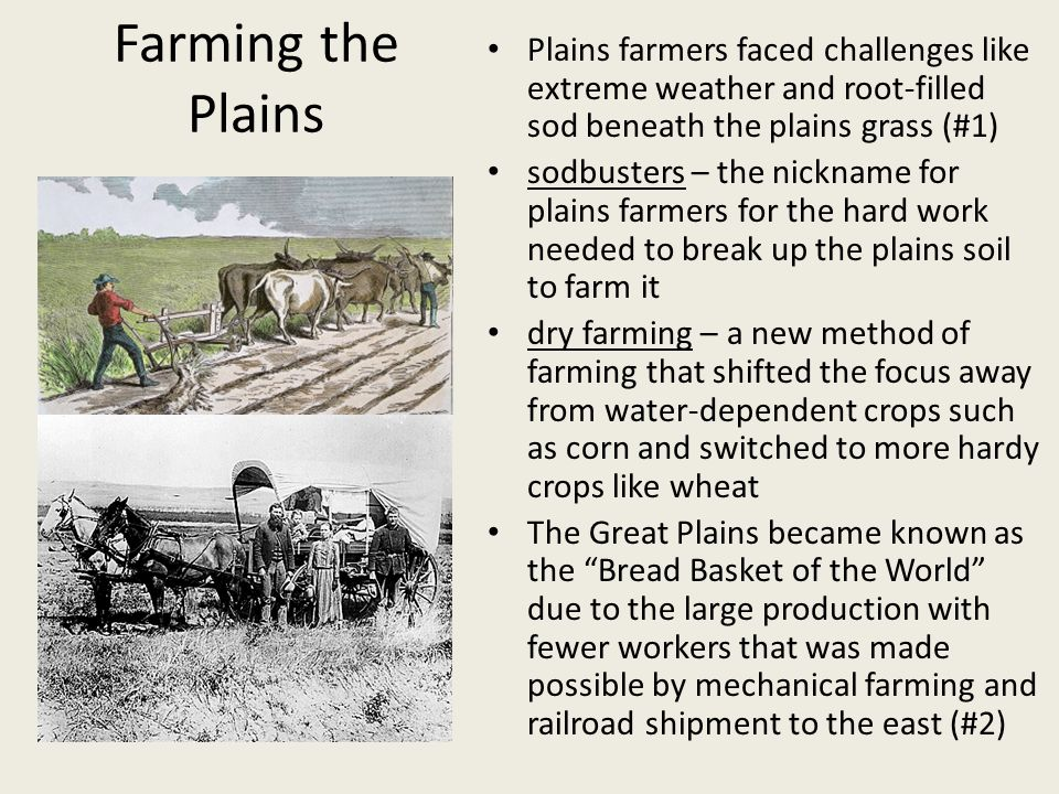 Farming the Plains Plains farmers faced challenges like extreme weather and root-filled sod beneath the plains grass (#1)