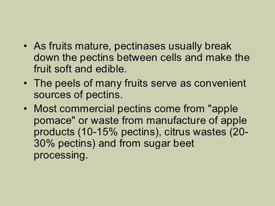 As fruits mature, pectinases usually break down the pectins between cells and make the fruit soft and edible.