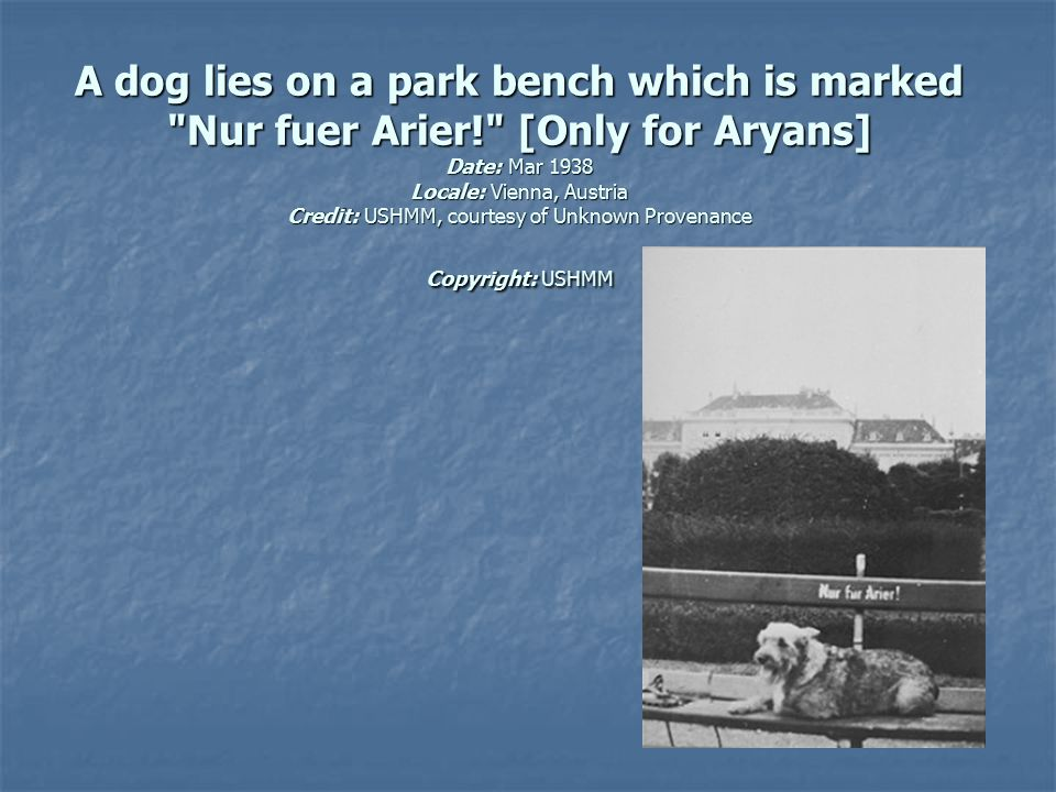 A dog lies on a park bench which is marked Nur fuer Arier