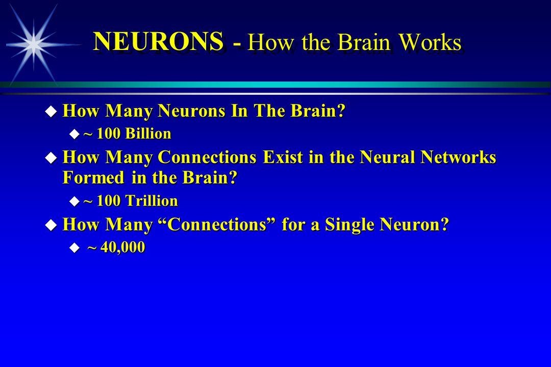NEURONS - How the Brain Works
