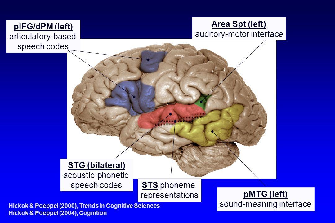Area Spt (left) pIFG/dPM (left) STG (bilateral) pMTG (left)