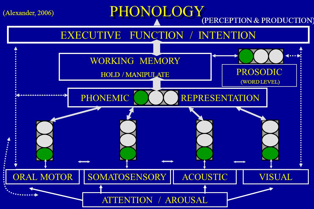 PHONOLOGY EXECUTIVE FUNCTION / INTENTION WORKING MEMORY PROSODIC