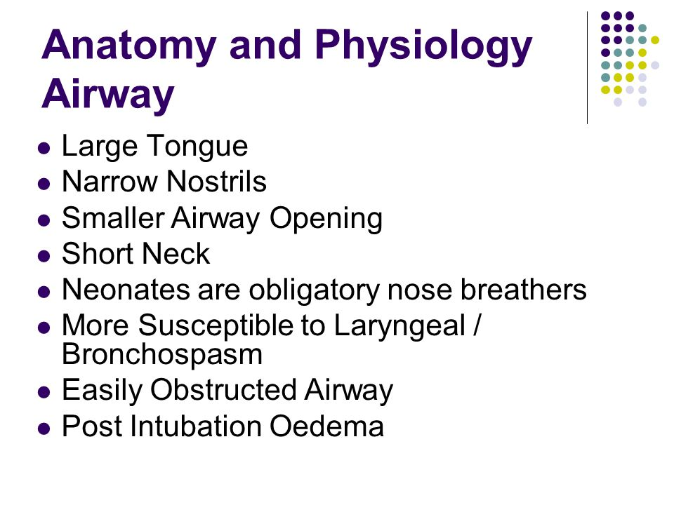 Anatomy and Physiology Airway