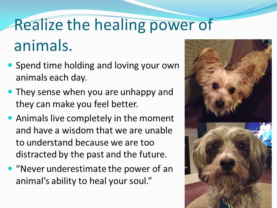 Realize the healing power of animals.