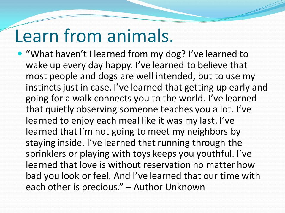 Learn from animals.